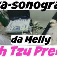 Vlog | Ultra-sonografia da Melly | Ultrassom Cadela Gestante (Prenha) | #dogsdaloi