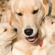 Pós Parto: Cuidados com a Cadela e Ninhada | O que aconteceu com Melly e seus Filhotes #dogsdaloi