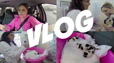 vlog-consulta-da-minha-cadelinha-shih-tzu-melly-e-seus-filhotes-dogsdaloi