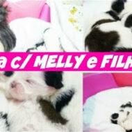 Vlog: Um dia (24 horas) com minha Cadelinha Shih Tzu Melly e seus Filhotes #dogsdaloi