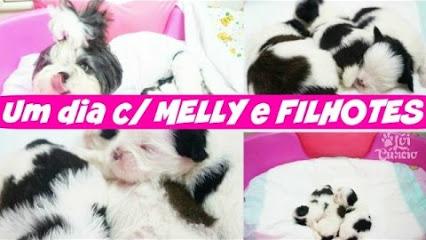 vlog-um-dia-24-horas-com-minha-cadelinha-shih-tzu-melly-e-seus-filhotes-dogsdaloi