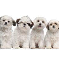O Que TER e o Que COMPRAR Para a Chegada do FILHOTE em Casa (Cachorro/Cão/Dog/Pet)