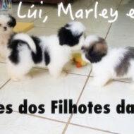 2 Meses dos Filhotes da Melly: Lúi, Marley e Suri #dogsdaloi