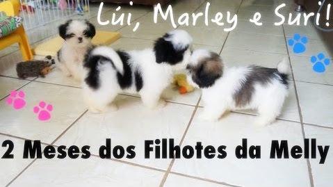 2-meses-dos-filhotes-da-melly-lui-marley-e-suri-dogsdaloi