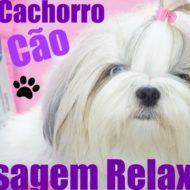 Massagem Relaxante Para Cachorro, Cão, Animal