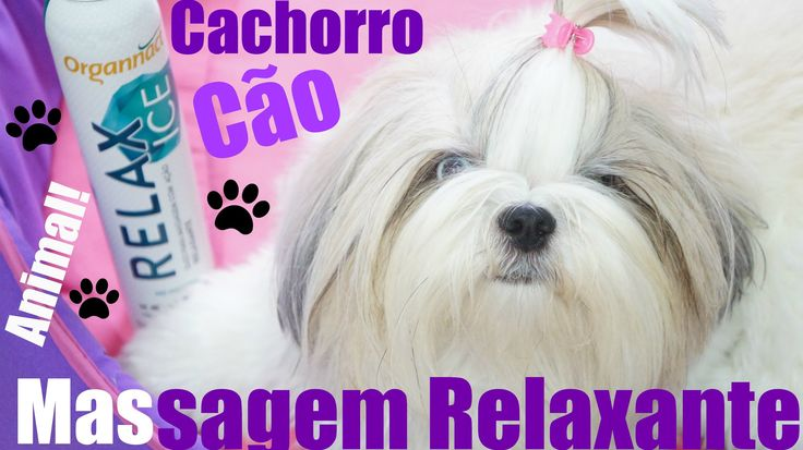massagem-relaxante-para-cachorro-cao-animal