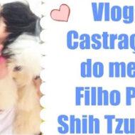 Vlog: Castração do meu Filho ShihTzu Lúi #Dogsdaloi