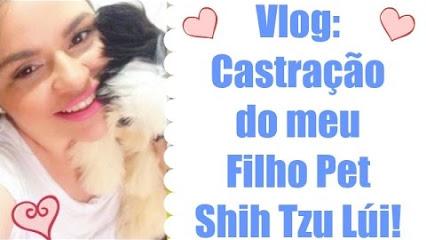vlog-castracao-do-meu-filho-shihtzu-lui-dogsdaloi