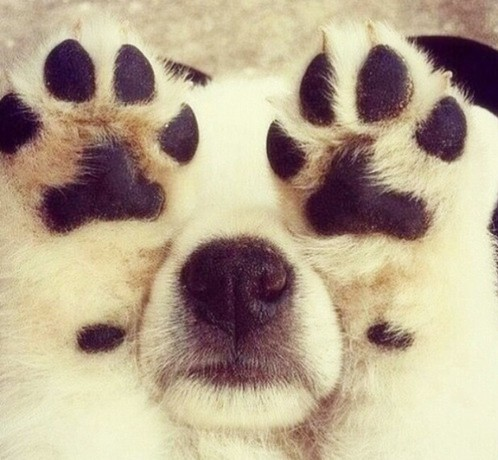 Coprofagia Em Caes Meu Cachorro Come Coco - Loi Curcio -1