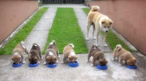 Coprofagia Em Caes Meu Cachorro Come Coco - Loi Curcio -2