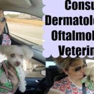 Vlog: Consulta Dermatológica e Oftalmológica Veterinária da Molly