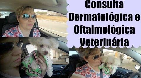 vlog-consulta-dermatologica-e-oftalmologica-veterinaria-da-molly