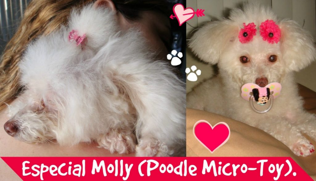 especial-molly-minha-poodle-micro-toy