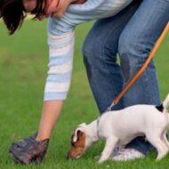 Adestre e Ensine Seu Cachorro Fazer Xixi e Cocô Fora De Casa