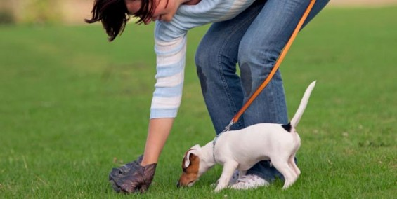 adestre-e-ensine-seu-cachorro-fazer-xixi-e-coco-fora-de-casa