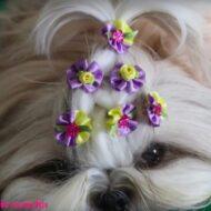 Penteado de Princesa Lindo, Rápido e Fácil Para Sua Cachorrinha (Shih Tzu) #LóiPor31Dias 21