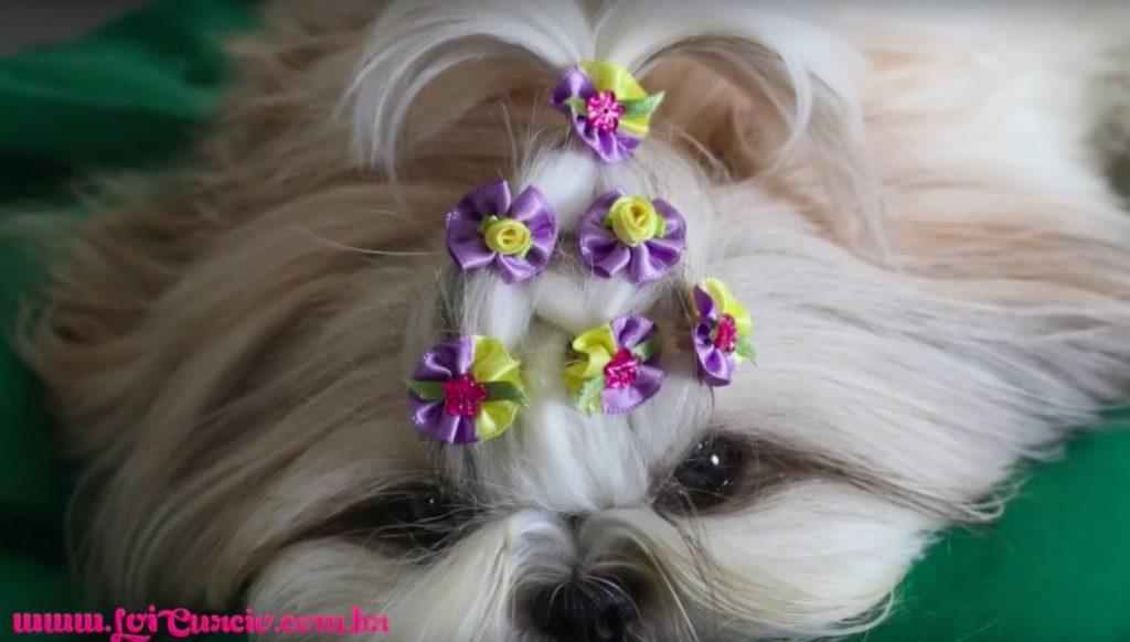 penteado-de-princesa-lindo-rapido-e-facil-para-sua-cachorrinha-shih-tzu-loipor31dias-21
