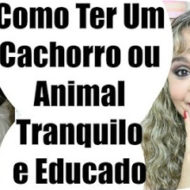 Como Ter Um Cão/Animal Mais Calmo, Tranquilo, Quieto e Educado