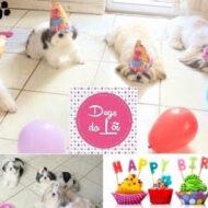 Comemorando o Aniversário das Meninas (Shih Tzu) #Dogsdaloi 09/15
