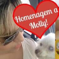 Que saudades da minha Molly! Homenagem a minha cadelinha Poodle, meu anjo de quatro patas