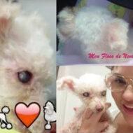 Vlog: Consulta Veterinária, Vacinas, Farmácia, Comprinhas Pet e Saúde de Molly
