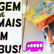 Direitos, Deveres e Dicas Sobre o Transporte Rodoviário (Viagem de Ônibus) de Cachorros, Gatos e Animais