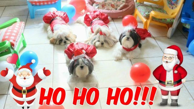 Feliz NATAL e Feliz ANO NOVO Amiguinhos e AuAumiguinhos #DogsdaLoi - Loi Curcio