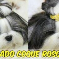 Penteado Coque Rosquinha (Donuts) Pet (Cadelinha/Cachorrinha) Para Fim de Ano (Natal e Ano Novo)