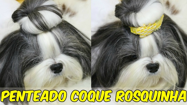 Penteado Coque Rosquinha (Donuts) Pet Cadelinha:Cachorrinha Para Fim de Ano (Natal e Ano Novo) - Loi Curcio