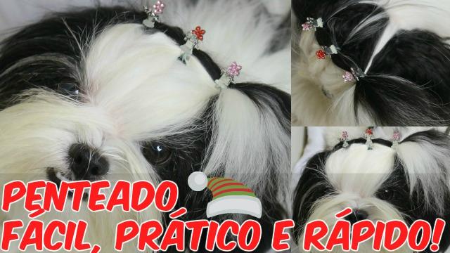 Penteado Pet (Cachorrinha) Facil, Pratico e Rapido de Fim de Ano (Natal e Ano Novo) - Loi Curcio
