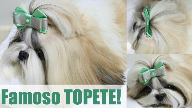 Penteado Pet Famoso Topete Para Cachorros e Cadelinhas (Facil e Prático) - Loi Curcio