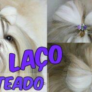 Penteado Pet: Laço Muito Fácil Para Sua Cachorrinha/Cadelinha