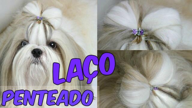 Penteado Pet Laco Muito Facil Para Sua Cachorrinha Cadelinha - Loi Curcio