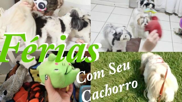 O Que Fazer Nas Ferias Com Seu Cachorro ou Pet {10 DICAS Para Curtir Muito} - Loi Curcio