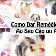 3 Formas Fáceis de Como Dar Remédio/Medicação/Suplemento Líquido Ao Seu Cachorro Ou Pet