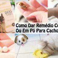 3 Formas Fáceis de Como Dar Remédio/Medicação/Suplemento Comprimido, Cápsula ou Em Pó Ao Seu Cão Ou Animal