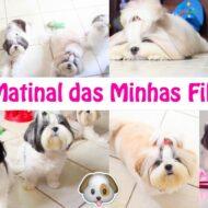 Rotina Matinal Das Minhas Filhas Pet (Cadelinhas Shih Tzu) | Morning Routine Of Dogs da Lói