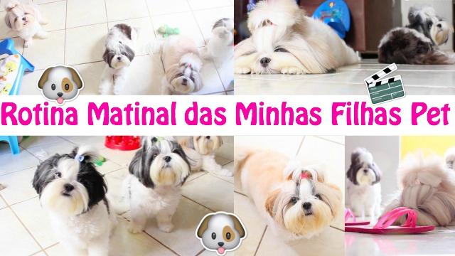 Rotina Matinal Das Minhas Filhas Pet Cadelinhas Shih Tzu Morning Routine Of Dogs - Loi Curcio