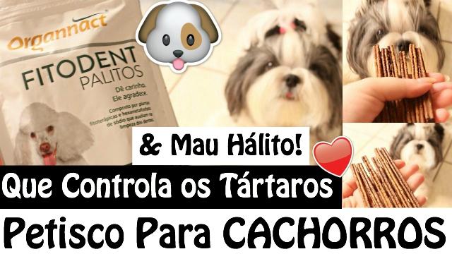 Petisco Para Controle dos Tartaros, Mau Halito e Higiene Bucal Dos Cães | Ossos Palitos Fitodent da Organnact - Loi Curcio