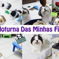 Rotina Noturna Das Minhas Filhas Pet (Cadelinhas Shih Tzu) | Nigth Routine Of Dogs
