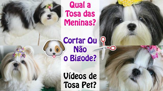 Qual a Tosa das Meninas (Minhas Shih Tzu) - Cortar ou Nao o Bigode - E Porque Nao Gravo Videos de Tosa Pet? - Loi Curcio