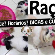 Tudo Sobre Alimentação Canina/Pet: Horários e Quantidade de Ração Para Filhotes, Adultos e Idosos (Dicas e Cuidados)