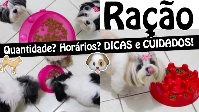 Tudo Sobre Alimentacao Canina:Pet - Horarios e Quantidade de Racao Para Filhotes, Adultos e Idosos (Dicas e Cuidados) - Loi Curcio