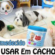 Como Usar o Lenço Umedecido e Higienizar as Partes Íntimas dos Cachorros/Animais