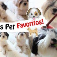 Momento Petisco Pet | Os Petiscos Favoritos das Minhas Filhas Pet Shih Tzu + Como Eu Dou