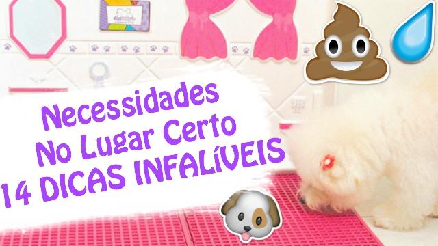14-Dicas-Infaliveis-de-Como-Ensinar-Cachorro-Ou-Animal-A-Fazer-Xixi-e-Coco-No-Lugar-Certo-Loi-Curcio