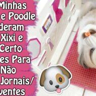 7 Truques Para Fazer As Necessidades No Lugar Certo Que Funcionaram Com Minhas Shih Tzu e Poodle e o Segredo Para o Cão Não Destruir Jornais/Absorventes | Veda28