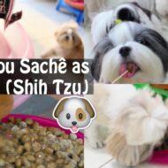 Como Dar Sachê Ao Cachorro Ou Animal Sem Melar + Como Reaproveitar o Caldo | Veda10