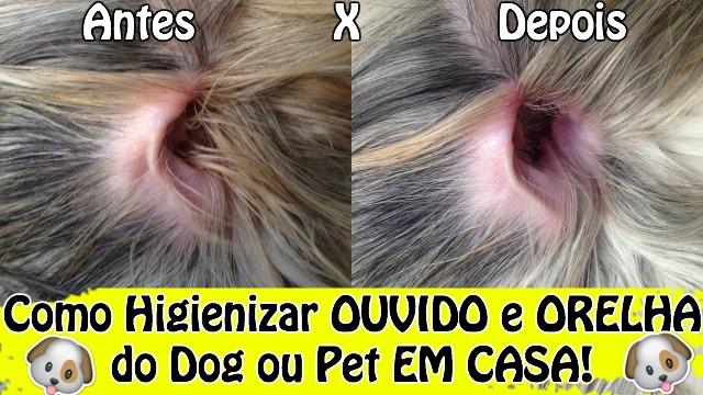 Como Limpar Ouvido e Orelha de Cachorro Ou Animal | Como Eu Limpo Minhas Shih Tzu | Veda18 - Loi Curcio