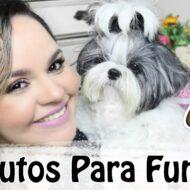 Fungos: Quais Produtos Usar Para Tratar Os Cães, Gatos e Animais Com Fungos | #Veda3